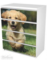 Möbelfolie Süßer Hund - Golden Retriever – Bild 5