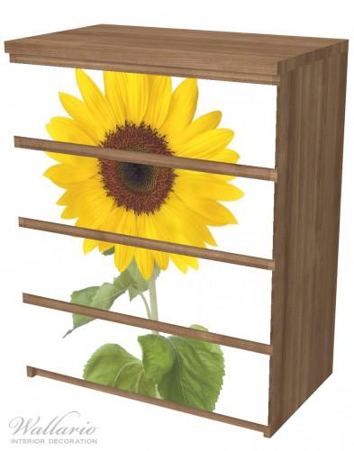 Möbelfolie Sonnenblume – Bild 6