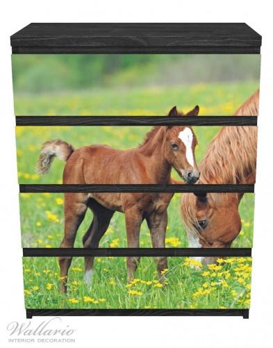 Möbelfolie Pferde auf der Koppel – Bild 1