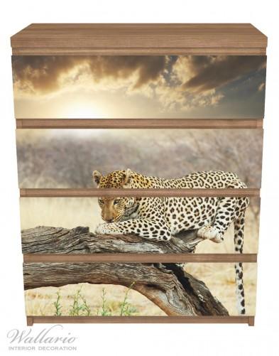 Möbelfolie Leopard auf Baumstamm in Afrika – Bild 3
