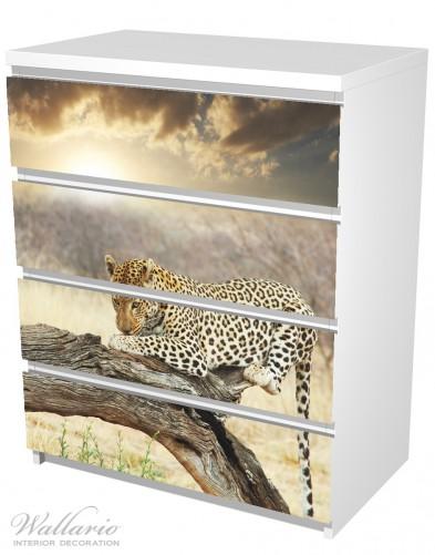 Möbelfolie Leopard auf Baumstamm in Afrika – Bild 5