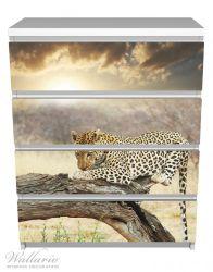Möbelfolie Leopard auf Baumstamm in Afrika – Bild 2