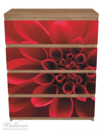 Möbelfolie Rote Dahlienblüte in Nahaufnahme – Bild 3