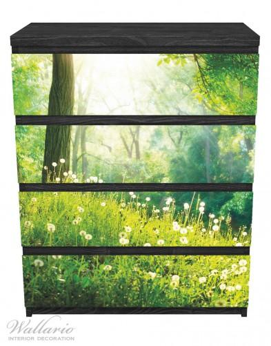 Möbelfolie Pusteblumen im Wald mit einfallenden Sonnenstrahlen – Bild 1