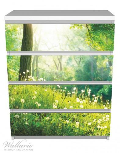 Möbelfolie Pusteblumen im Wald mit einfallenden Sonnenstrahlen – Bild 2