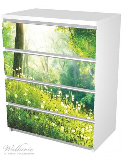 Möbelfolie Pusteblumen im Wald mit einfallenden Sonnenstrahlen – Bild 5
