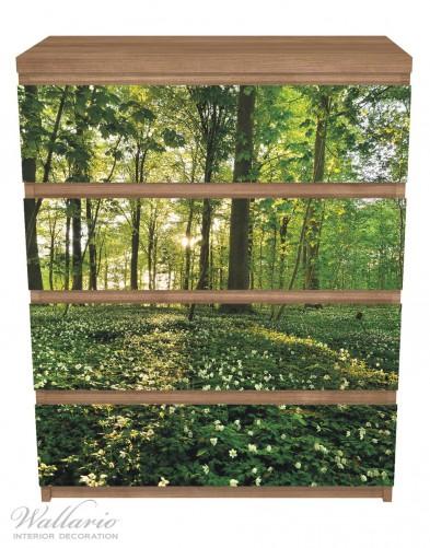 Möbelfolie Waldanemonen und Sonnenstrahlen im Wald – Bild 3