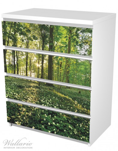 Möbelfolie Waldanemonen und Sonnenstrahlen im Wald – Bild 5