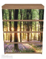 Möbelfolie Blaue Hasenglöckchen im Wald mit Sonnenstrahlen – Bild 3
