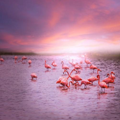 Möbelfolie Rosa Flamingos bei Sonnenuntergang – Bild 3