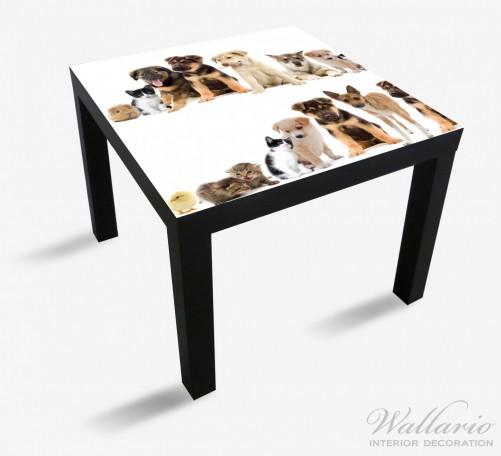 Möbelfolie Süße Haustiere - Katzen  Hunde  Hamster  Küken – Bild 1