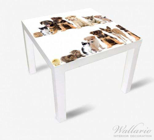 Möbelfolie Süße Haustiere - Katzen  Hunde  Hamster  Küken – Bild 2
