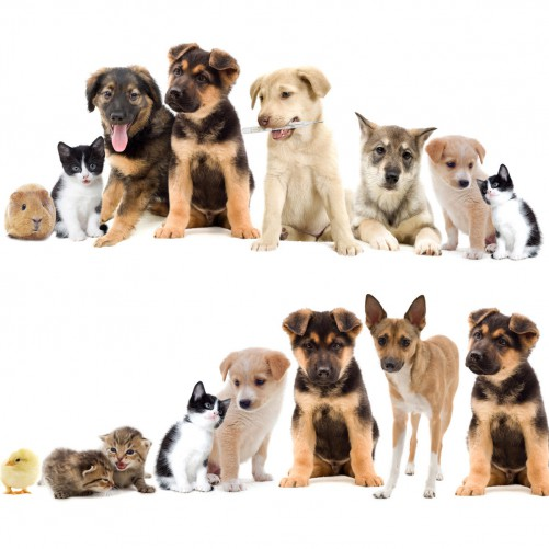 Möbelfolie Süße Haustiere - Katzen, Hunde, Hamster, Küken – Bild 3