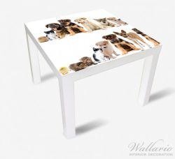 Möbelfolie Süße Haustiere - Katzen, Hunde, Hamster, Küken – Bild 2