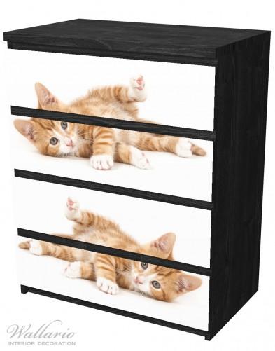 Möbelfolie Süße Katze mit großen Augen - rot weiß getigert – Bild 4