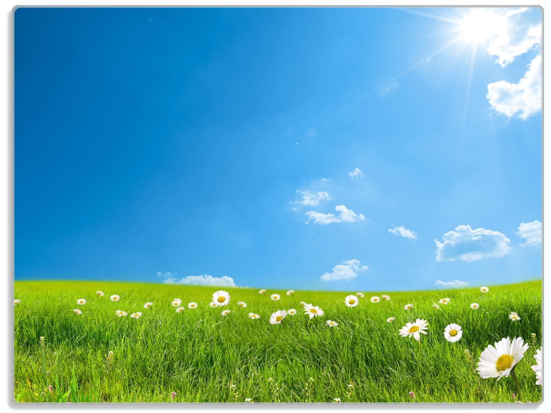 Glasunterlage Sommerwiese - Weiße Gänseblümchen vor blauem Himmel – Bild 1