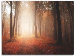 Glasunterlage Herbstwald - Weg zu einer Lichtung im Wald – Bild 1