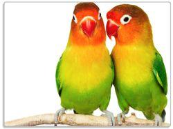 Glasunterlage Papageien auf dem dünnen Ast – Bild 1