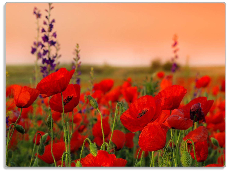 Glasunterlage Mohnblumen auf dem Feld – Bild 1