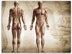 Glasunterlage Anatomie Mensch II – Bild 1