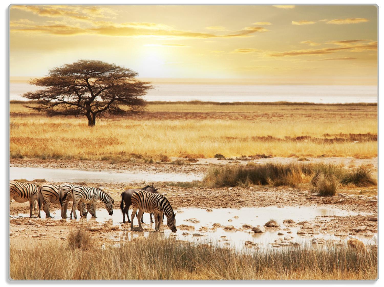 Glasunterlage Safari in Afrika  eine Herde Zebras am Wasser – Bild 1