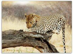 Glasunterlage Leopard auf Baumstamm in Afrika – Bild 1