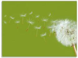 Glasunterlage Pusteblume auf der Wiese mit fliegenden Samen – Bild 1