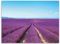 Glasunterlage Lavendelfeld unter blauem Himmel – Bild 1
