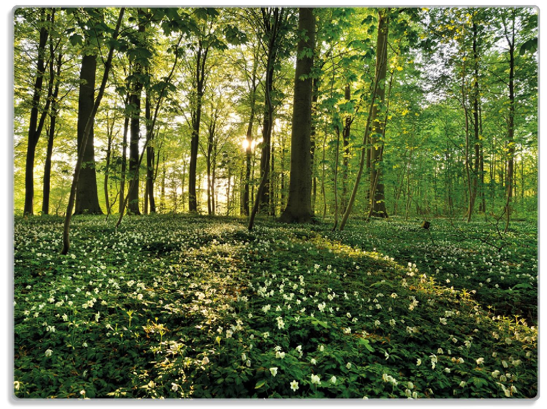 Glasunterlage Waldanemonen und Sonnenstrahlen im Wald – Bild 1