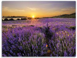 Glasunterlage Sonnenuntergang über dem Lavendel – Bild 1