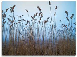 Glasunterlage Schilfrohr am See vor blauem Himmel – Bild 1