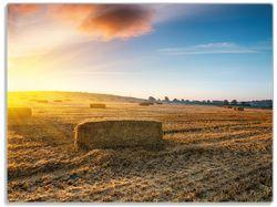 Glasunterlage Stroh auf dem Feld bei untergehender Sonne – Bild 1