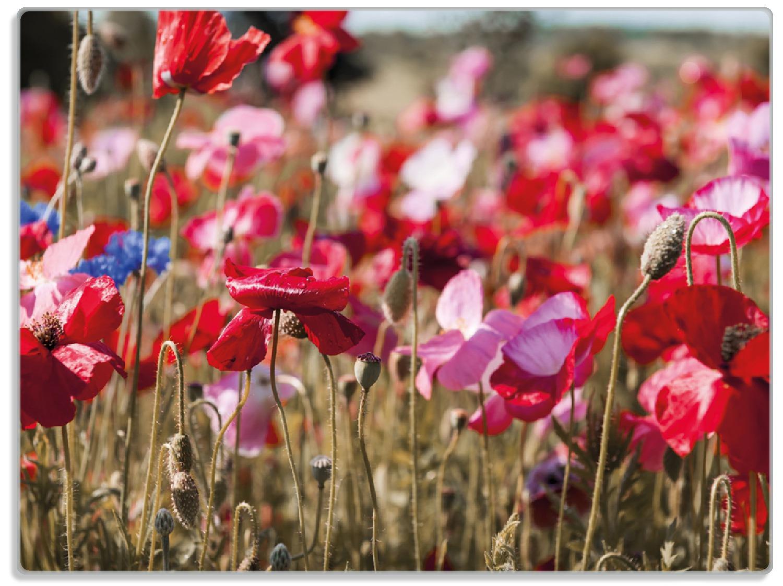 Glasunterlage Mohnblumen am Rande eines Feldes – Bild 1