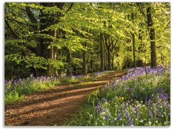 Glasunterlage Blaues Hasenglöckchen im Sommerwald – Bild 1