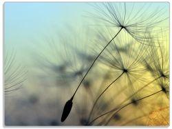 Glasunterlage Samen der Pusteblume in Nahaufnahme vor blauem Himmel – Bild 1