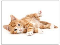 Glasunterlage Süße Katze mit großen Augen - rot weiß getigert – Bild 1