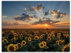 Glasunterlage Sonnenblumenwiese vor Wolken mit Sonnenuntergang – Bild 1