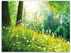 Glasunterlage Pusteblumen im Wald mit einfallenden Sonnenstrahlen – Bild 1