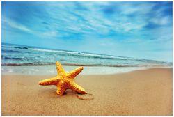 Vliestapete Seestern am Strand am Meer – Bild 1