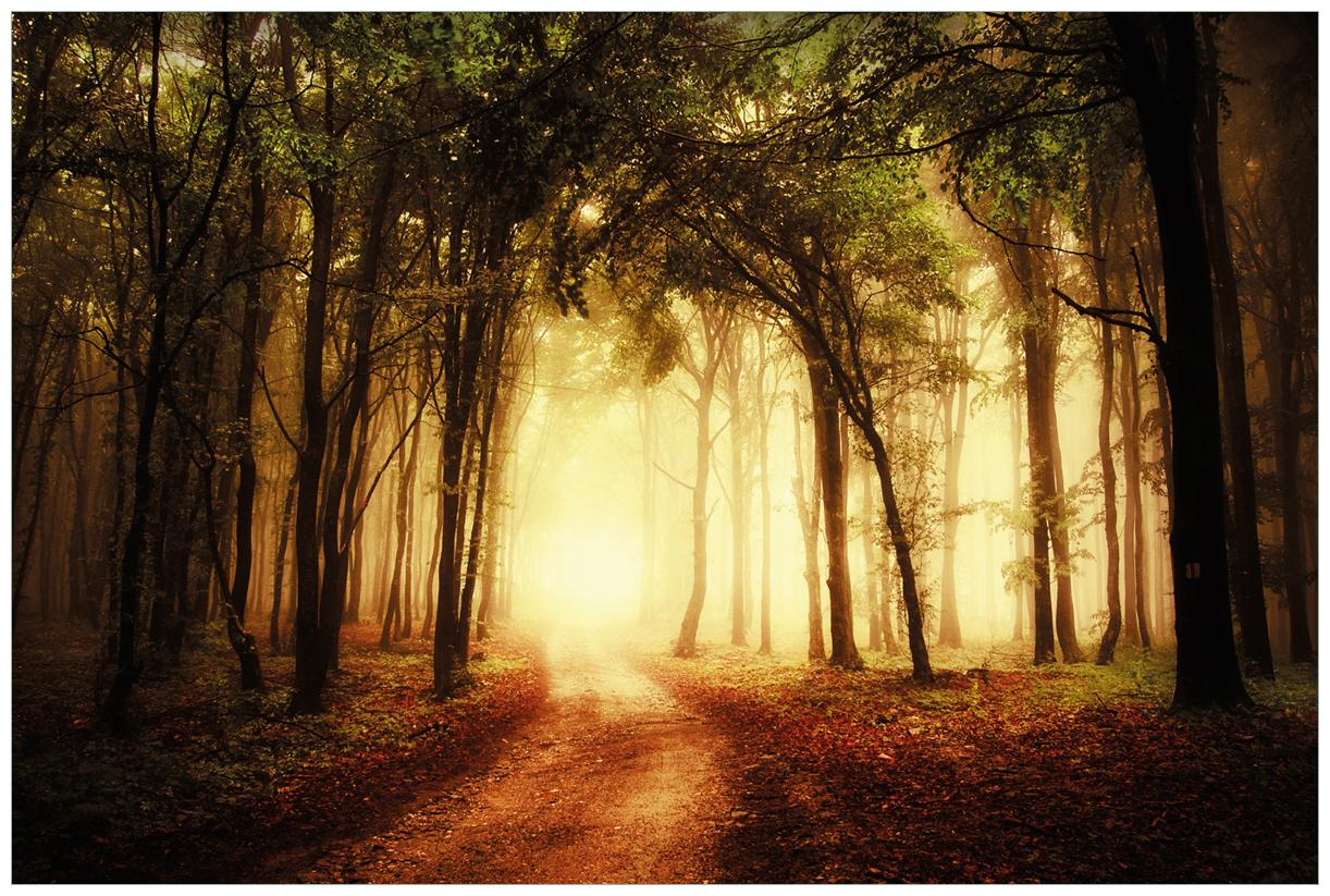 Vliestapete Sonnenuntergang auf dem Waldweg – Bild 1