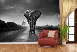 Vliestapete Elefant bei Sonnenaufgang in Afrika schwarzweiß – Bild 4