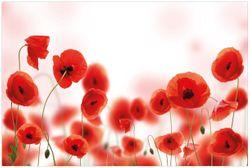 Vliestapete Leuchtende Mohnblumen - Rote Mohnblumenblüten – Bild 1