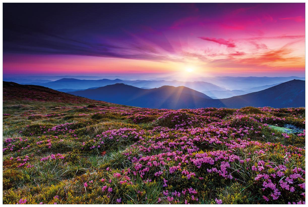 Vliestapete Blumenbedeckte Wiese bei Sonnenuntergang – Bild 1