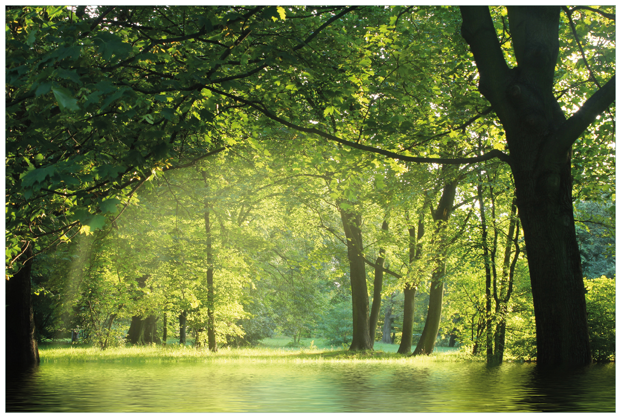 Vliestapete Idyllischer See im Wald bei Sonnenschein – Bild 1
