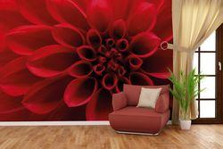 Vliestapete Rote Dahlienblüte in Nahaufnahme – Bild 4
