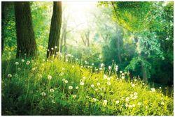 Vliestapete Pusteblumen im Wald mit einfallenden Sonnenstrahlen – Bild 1