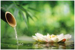 Vliestapete Seerosen und Bambus auf dem Wasser – Bild 1