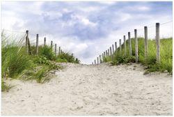 Vliestapete Auf dem Weg zum Strand durch Dünen – Bild 1