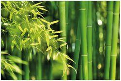 Vliestapete Bambuswald mit grünen Bambuspflanzen – Bild 1