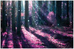 Vliestapete Fantasie im Wald - Pinke Blumen in der Sonne – Bild 1
